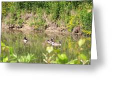 Canada Geese On Pond Greeting Card