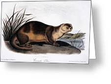 Canada Otter, 1846 Greeting Card