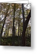 Canada Trees Greeting Card
