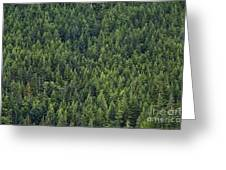 Canadian Boreal Forest. Greeting Card
