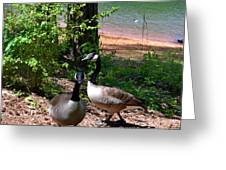 Canadian Geese-12 Greeting Card