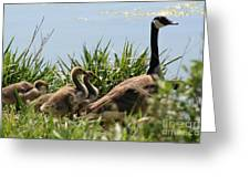 Canadian Geese 4 Greeting Card