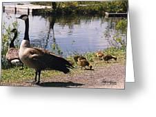 Canadian Geese At Trojan Lake Ny Greeting Card