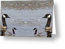 Canadian Goose Symmetry Greeting Card
