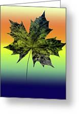 Canadian Maple Leaf Greeting Card