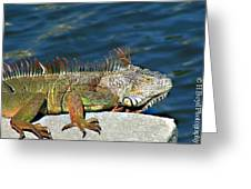 Canal King Greeting Card by Heather  Boyd
