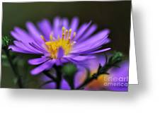 Candles On A Daisy Greeting Card