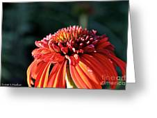 Candy Corn Cone Flower Greeting Card