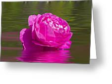 Candy Pink Rose  Greeting Card