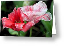 Candy Stripers Greeting Card