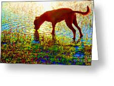 Canelo Drinking Water By The Lake Greeting Card