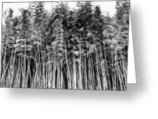 Canes At Canebrake Greeting Card