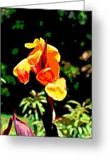 Canna In Summer Greeting Card