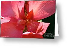 Canna Lily Close Up Greeting Card