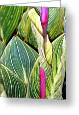 Canna Lily Foliage Greeting Card