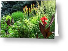 Canna Lily Garden Greeting Card by Gretchen Wrede