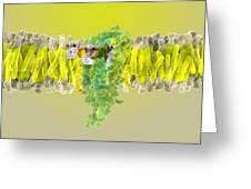 Cannabinoid Receptor Binding, Artwork Greeting Card