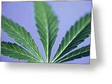 Cannabis Leaf Greeting Card