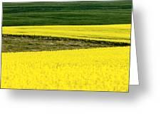 Canola Crop Greeting Card