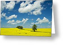 Canola Field And Clouds, Rathwell Greeting Card