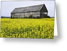 Canola Field And Old Barn Greeting Card