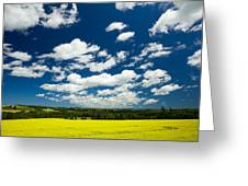 Canola Field, Brookfield, Prince Edward Greeting Card