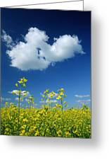 Canola Flowers, Marquette, Manitoba Greeting Card