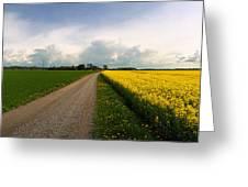 Canola-rapeseed Flowers Greeting Card