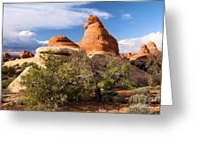 Canyonlands Needles Greeting Card