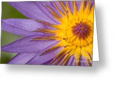 Cape Blue Waterlily Nymphaea Capensis Greeting Card