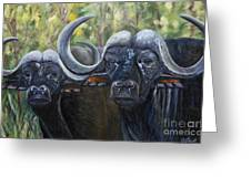 Cape Buffalo 2 Greeting Card