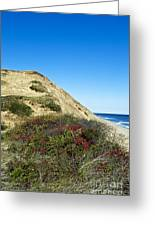 Cape Cod Dune Cliff Greeting Card