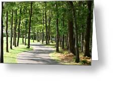 Cape Cod Walking Path Greeting Card