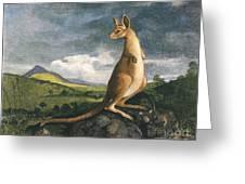 Captain Cook: Kangaroo, 1773 Greeting Card