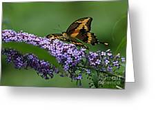 Captivating Swallowtail On Butterfly Bush Flower Greeting Card