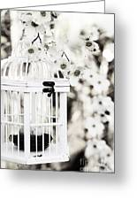 Captured Spring In Black And White Greeting Card