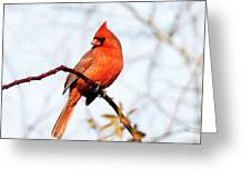 Cardinal 2 Greeting Card