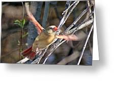 Cardinal 4 Greeting Card
