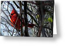 Cardinal And Thorns Greeting Card