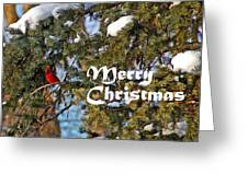 Cardinal Christmas Card Greeting Card