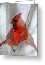 Cardinal Collage Greeting Card