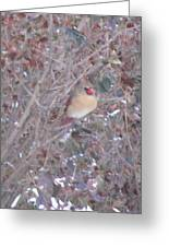 Cardinal Colorful Covers Greeting Card