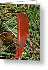 Cardinal Feather Greeting Card