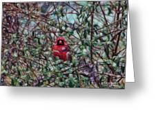 Cardinal Feb 2012 Greeting Card