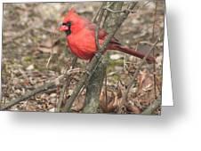Cardinal In A Bush Greeting Card