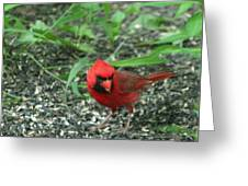 Cardinal In Springtime Greeting Card