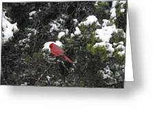 Cardinal In The Snow Greeting Card by Rebecca Cearley