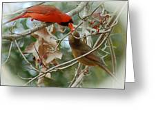 Cardinal Kisses Greeting Card