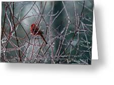 Cardinal On Ice Greeting Card