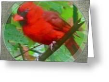 Cardinal Rings Greeting Card